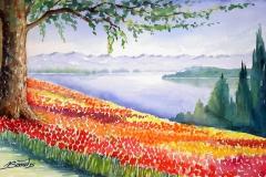 K-04-Tulpenblüte-Mainau