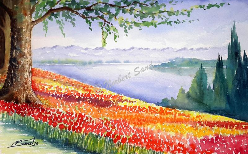 Tulpenblüte Mainau
