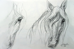 09-Naturbelassene-Schönheit-Pferd