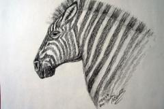 10-Zebra