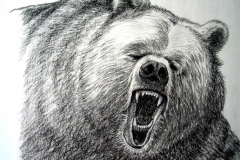 13-Grizzly-attack