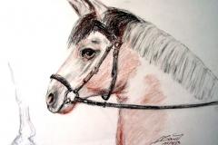 14-Stolzes-Pony